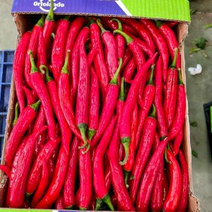 Chile Pepper Red
