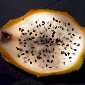Pitahaya Yellow