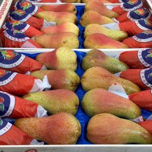 Pear Abate Fetel