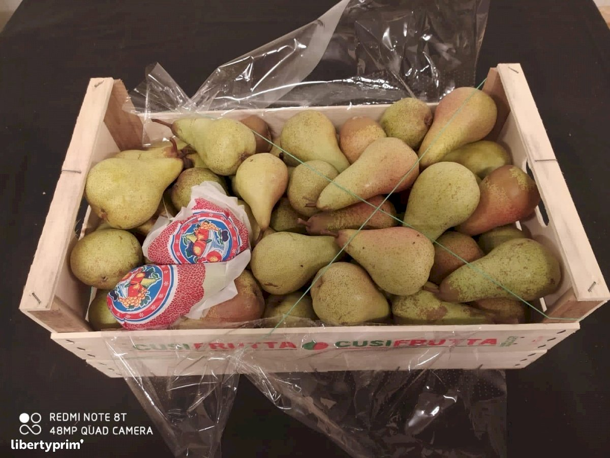 Pear Abate Fetel Italy Conventional Grower - Peruzzo   Libertyprim