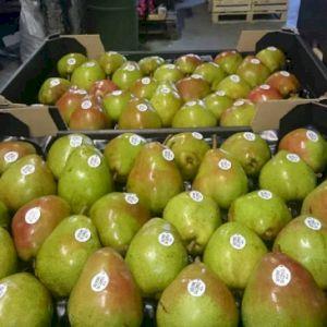 Pear Doyenne De Comice