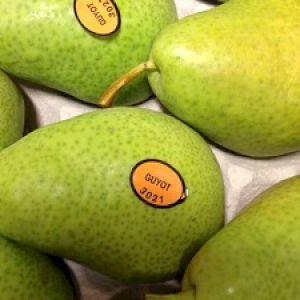 Pear Guyot