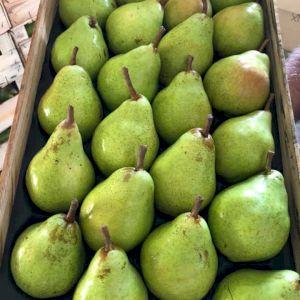 Pear Green Williams