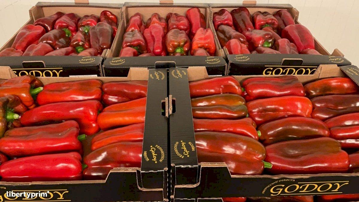 Pepper Red Class 1 Spain Conventional Grower - Peruzzo | Libertyprim