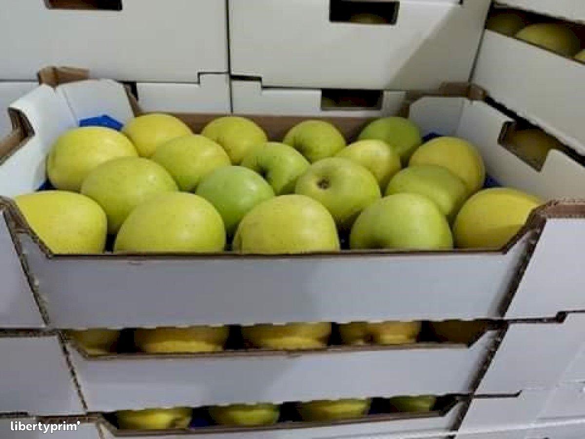 Manzana Golden Categoría 2 Portugal Productor Convencional - DAUTOR | Libertyprim