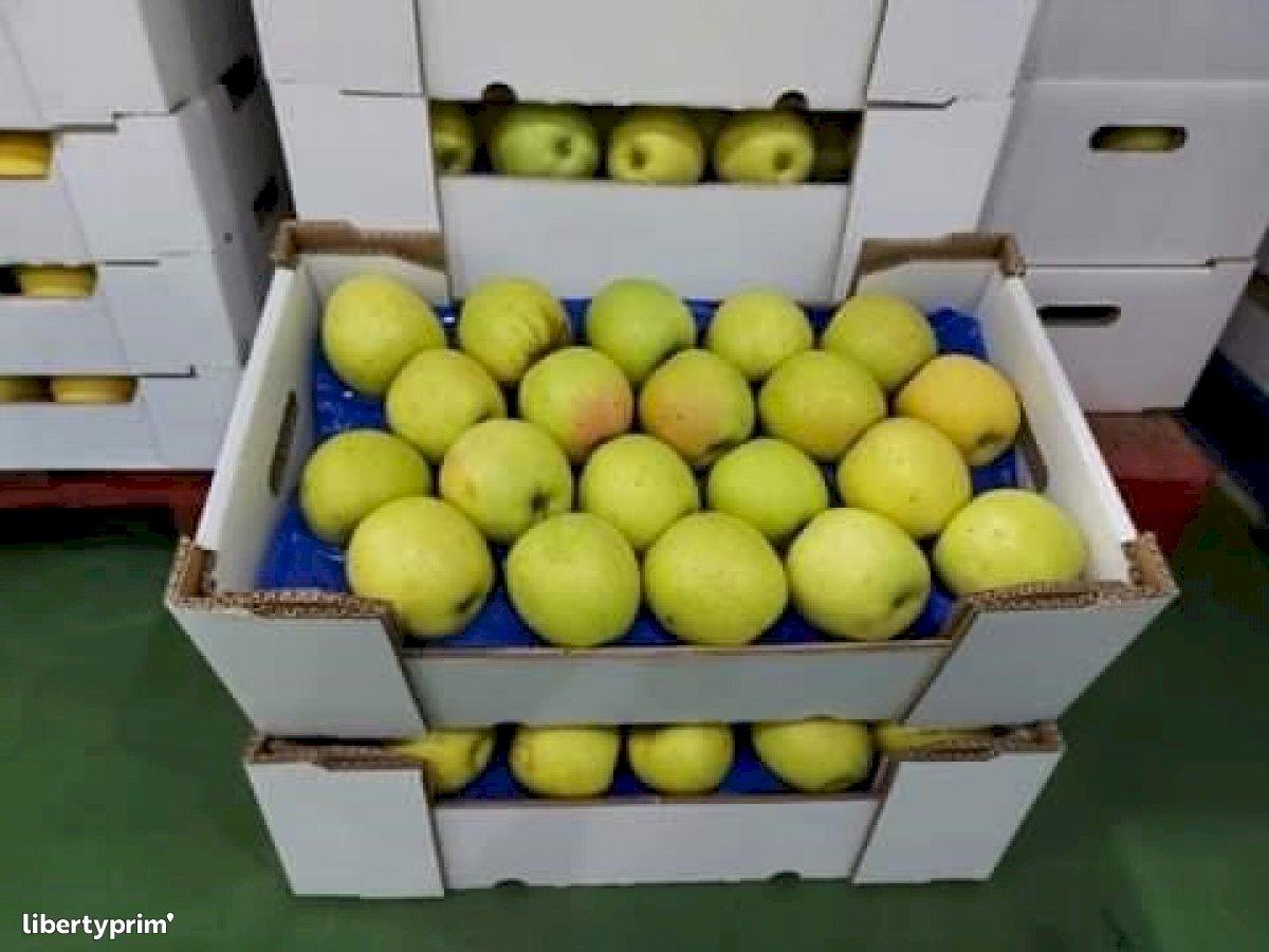 Apple Golden Class 2 Portugal Conventional Grower - DAUTOR | Libertyprim
