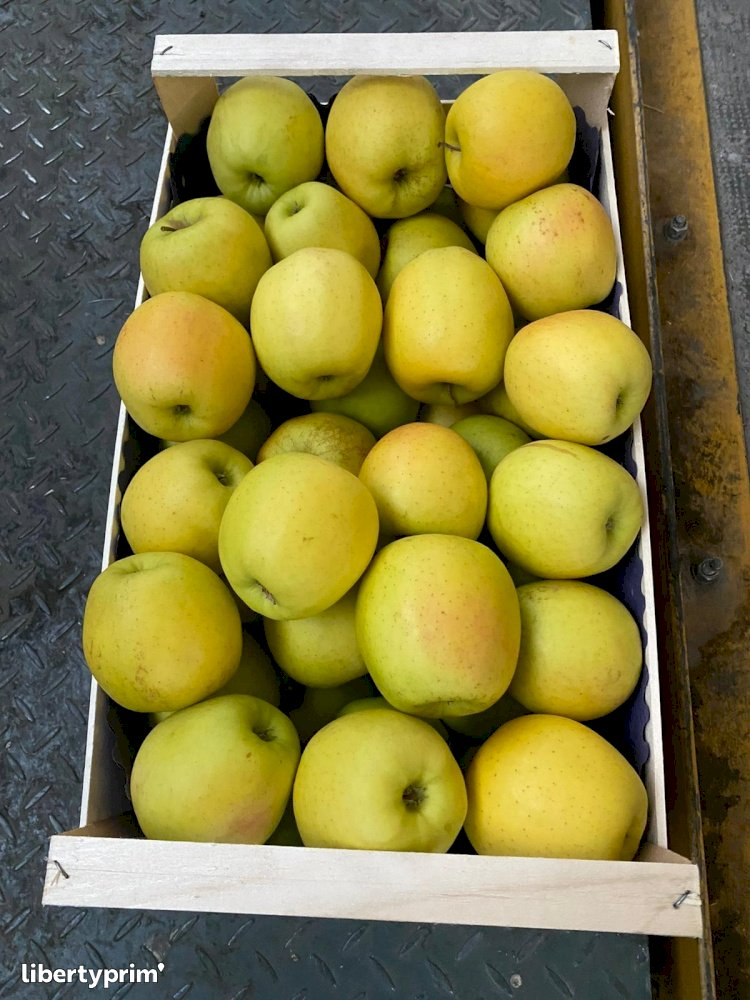 Apple Golden Class 1 Italy Conventional Grower - Peruzzo | Libertyprim