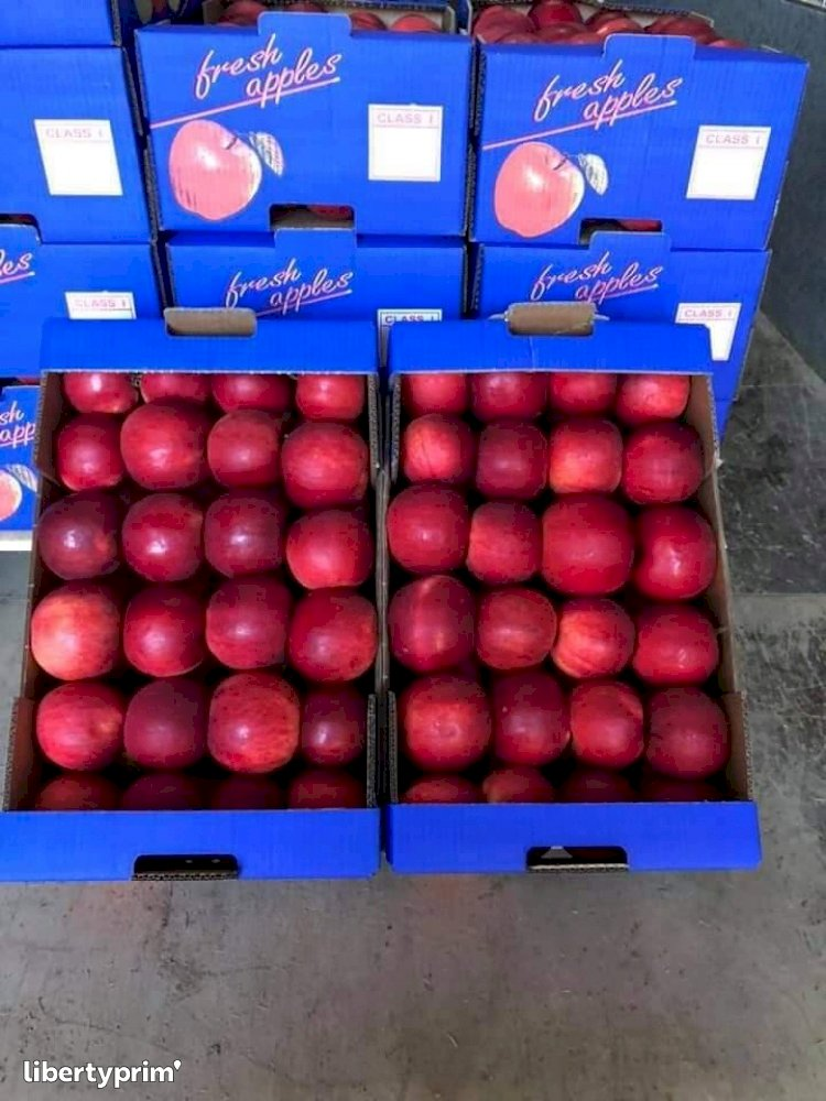 Apple Idared Class 1 Macedonia North Exporter - Owner | Libertyprim