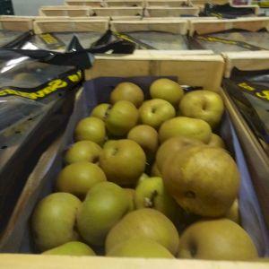 Apple Reinette Canada Grise