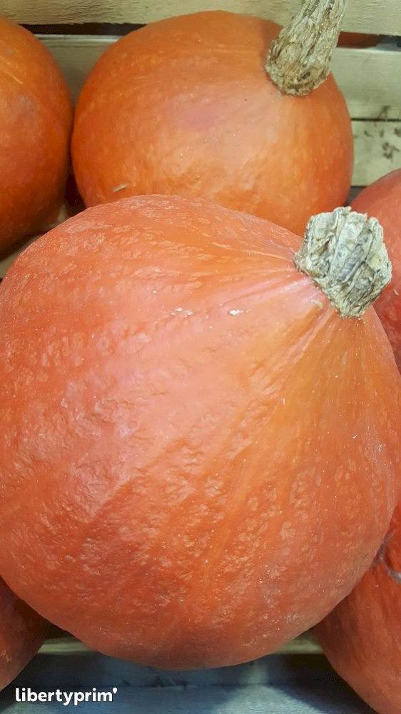 Red Kuri Squash Class 1 France Conventional Grower - LE-VILI | Libertyprim