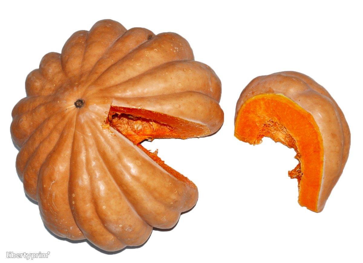 Gourd Tunisia Exporter - Mehdi | Libertyprim