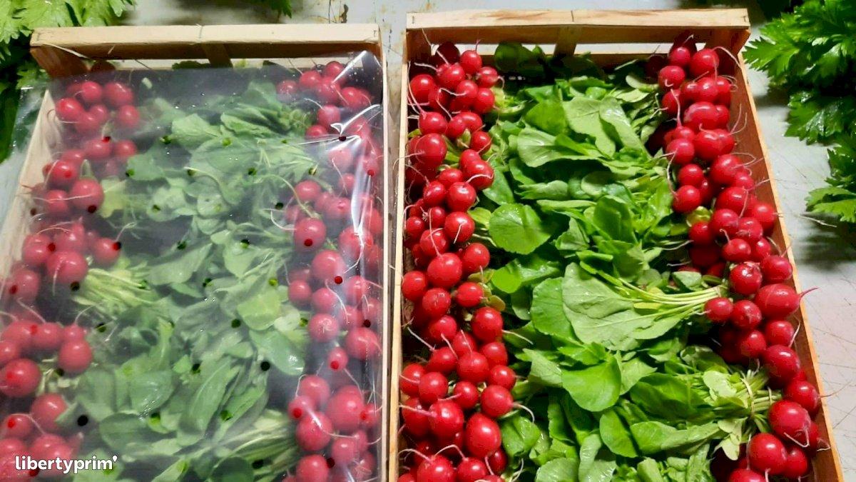 Radish France Organic Grower - Sarl.lisathier   Libertyprim