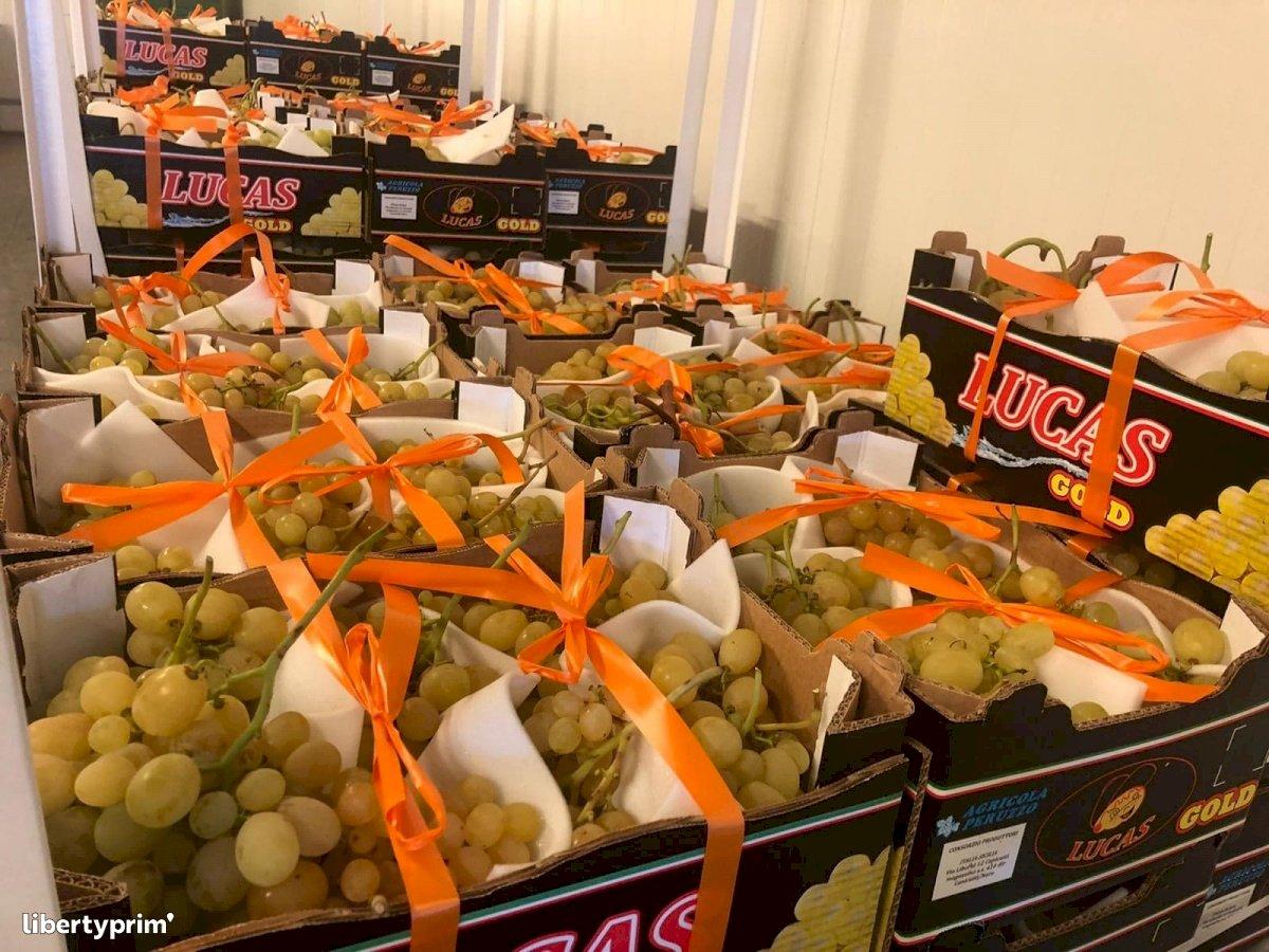 Grapes Conventional Grower - Peruzzo   Libertyprim