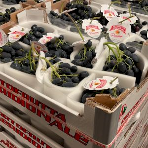 Grapes Black Magic