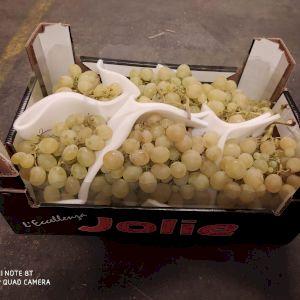 Grapes Italia