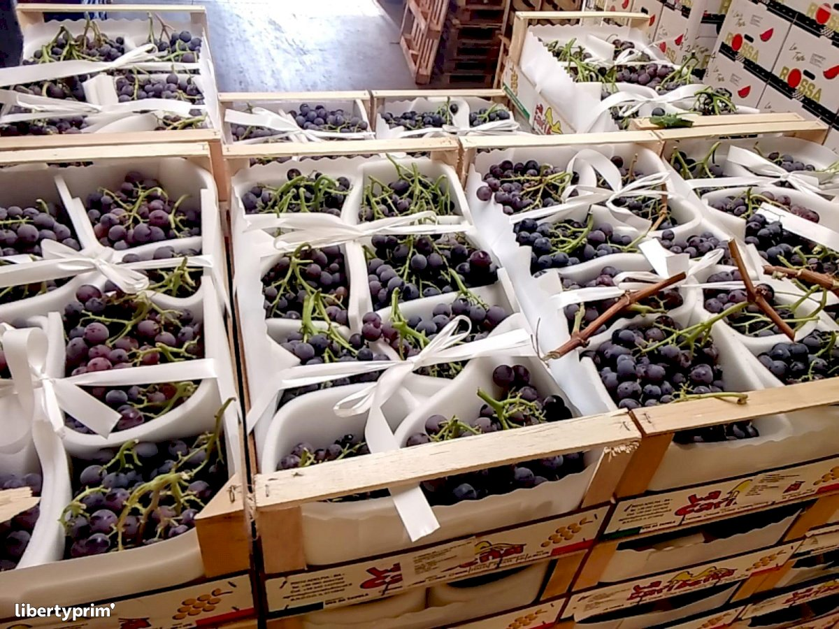 Grapes Muscat Extra Italy Conventional Grower - Peruzzo | Libertyprim