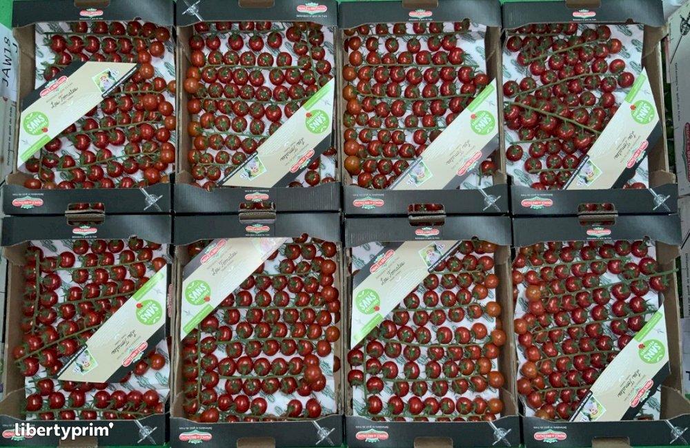 Tomato Cherry Grape Class 1 France Shipper - CELTILEG | Libertyprim