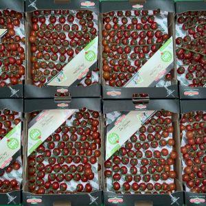 Tomate Cherry Rama