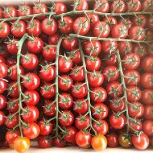 Tomato Cherry Grape