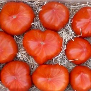 Tomato Beefsteak