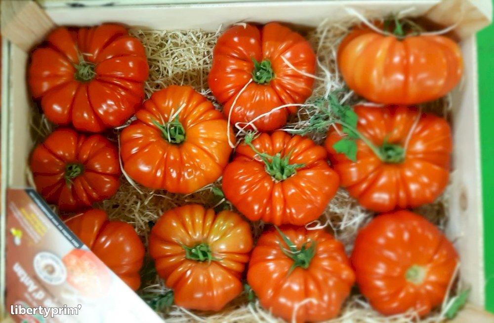 Tomate Marmande Categoría 1 Francia Shipper - CELTILEG | Libertyprim
