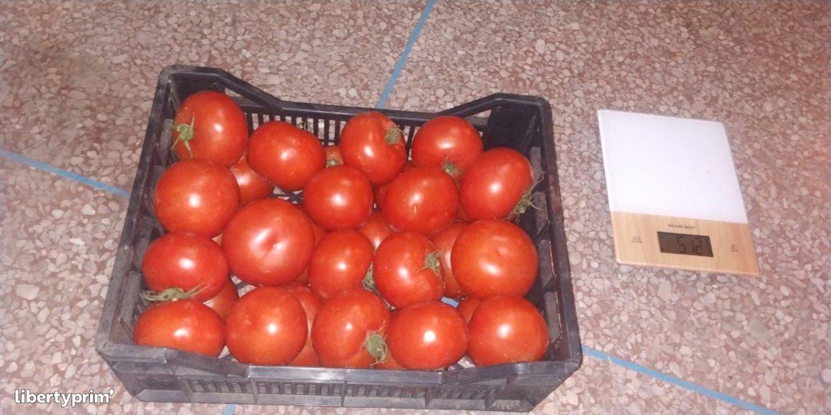 Tomato Round Extra Morocco Import/export - Christ591 | Libertyprim
