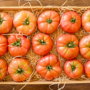 Tomato Pink