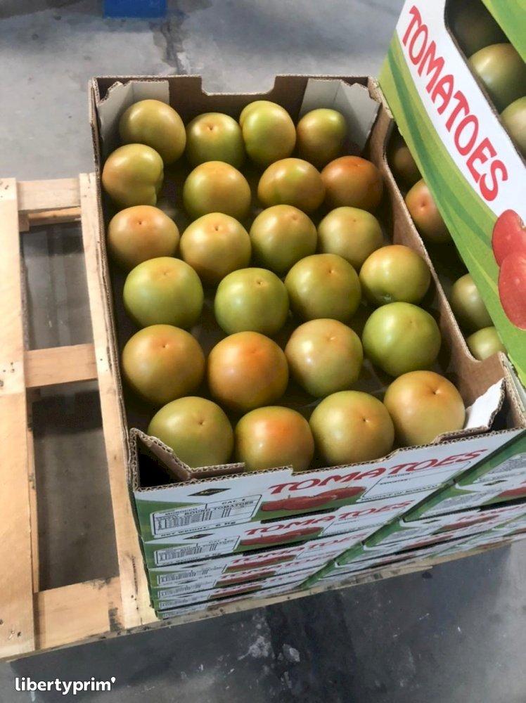 Tomato Round Extra Morocco Exporter - Saibprime   Libertyprim