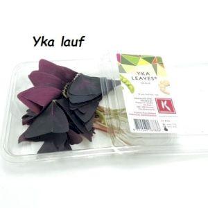 Yka Leaves
