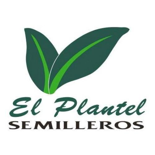El Plantel Semilleros
