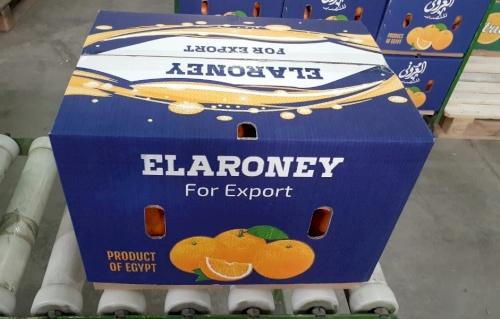 ElARONEY For Export