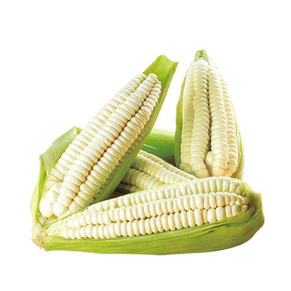 Corn Choclo