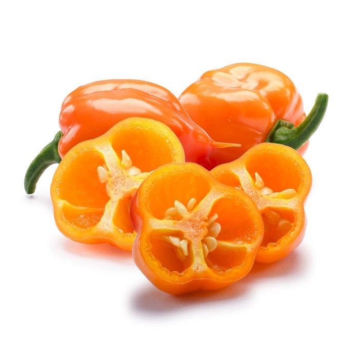 Chile Pepper Lanterne