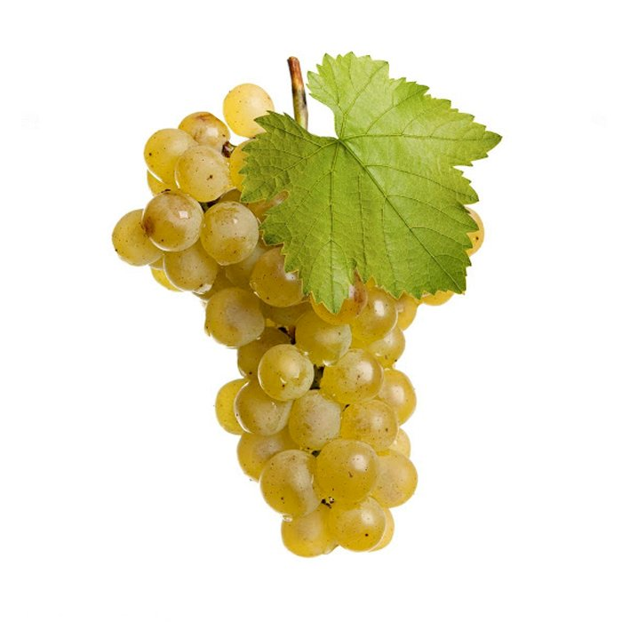 Grapes Chasselas